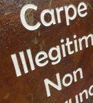 stone_carpe-illegitimi-2